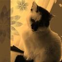 猫のあくび 文具と猫と日常と