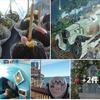 その昔、イワシ漁で栄えた港町が、モントレー水族館を中心に観光スポットに ❣