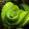 【エメラルドグリーンの蛇】
