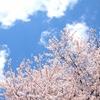 不倫問題〜桜を見ても泣ける日々