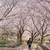 桜の鈴鹿フラワーパークと加佐登神社(かさどじんじゃ)