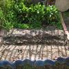 【家庭菜園】後は、ほうれん草だけ。