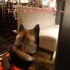 生後247日目 ドッグカフェに行ってみた。