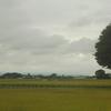 銀木犀を探す