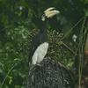 マレーシア ボルネオ島 キナバル山・コタキナバル周辺の野鳥