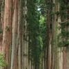 【これが二千年の歴史!戸隠神社】2.驚愕の杉並木!