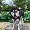 犬のアレルギー検査!お値段、保険適用は?~スペクトラム ラボ ジャパン~