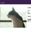 【エムPの昨日夢叶(ゆめかな)】第1670回『愛猫・レフくん!漫画原作映画『濃紫の葡萄』に出演する夢叶なのだ!?』[10月3日]
