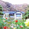 鎌倉文学館の秋バラ!神奈川県・湘南のローズガーデン