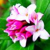 二十四節気 4月5日より清明。晴れ渡った青空と花々のコントラストがもっとも美しい頃です。