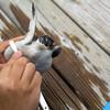 ウミガメ好きなら一度は行きたい。小笠原海洋センターでウミガメを学びつつ、触れ合ってきた!