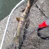 道北オホーツク海・日本海にて鮭釣り
