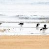 三重県の干潟