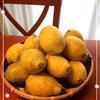 レモンお好きな方いらっしゃいますか?