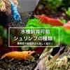 水槽飼育可能なシュリンプの種類!難易度や飼育方法も詳しく紹介!