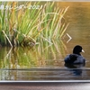 野鳥カレンダー 2021年2月