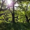 樹と水の文化が日本人を育てた