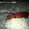 剣先イカと改造タコエギの実釣はいかに