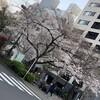 人形町の夜桜、浜町緑道の点描・・・歩き花見で贅沢なひと時