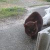 4-350   外猫日記 2020年春