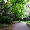 新宿御苑の兼六園菊桜など