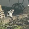 秋と猫とアロマサシェ作り。