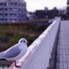 伊丹空港の千里川へ行ってきましたよ〜
