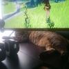 寒くなってきましたね。猫がお腹を出して寝なくなってしまった。