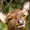 宮崎市フェニックス自然動物園に行ってきた 宮崎・大分の旅 #1