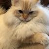 ワッフルと猫のご挨拶