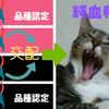 猫の純血種・雑種の見分け方と違い【簡単な4つのポイント】