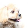 愛犬の治療費3年間でなんと172万円(≧◇≦)
