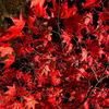 【埼玉県】森林公園の紅葉&イルミネーションの口コミ・感想。混雑やお得な駐車場情報(2020年版)
