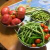 野菜プロジェクト信州・・・福島の子どもに安全な野菜を・・・が始まりました