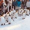 冬の旭山動物園の見どころチェック|2019年11月11日㊊~2020年4月7日㊋|北海道旭川市