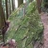 【大阪】竜王山中の仏様の隠れ家、穴仏