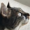 ウチの猫、多分14歳くらいにて  (1)