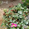 プレイガールの芽がどんどん 2011/05/07
