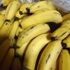 甘熟王バナナ15kg届きました!