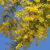 日中は曇り!花粉多し?