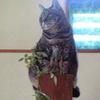 ただいま喪中・愛猫を亡くしました