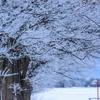 北海道民は冬に部屋を暖かくしすぎじゃない?