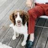 一人暮らしでも犬は飼えますが、おすすめしない2つの側面