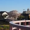 「桜橋」でお花見