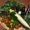 無農薬🍆朝採りお野菜🍅