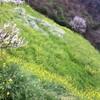 春を感じる愛媛旅 (1)