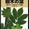 【京大生が選ぶ!】樹種同定に欠かせないおすすめの樹木図鑑2冊+1冊