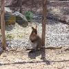 【メルボルン動物園】Melbourne Zooの割引チケット($4安くなる!)を購入する方法