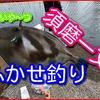 須磨で春のチヌをフカセで狙う!!動画紹介