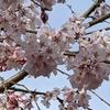 桜餅の香り